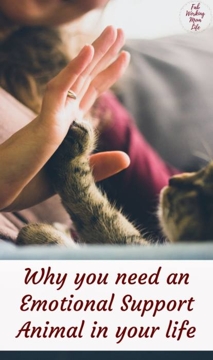 Why you need an emotional support animal in your life | Fab Working Mom Life #animals #pets #mentalhealth #emotionalsupport #health