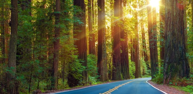World Famous Redwood Highway in Northern California United States. Sun Between Redwood Trees.