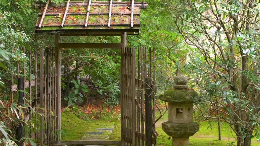jardin japonais quelles plantes et