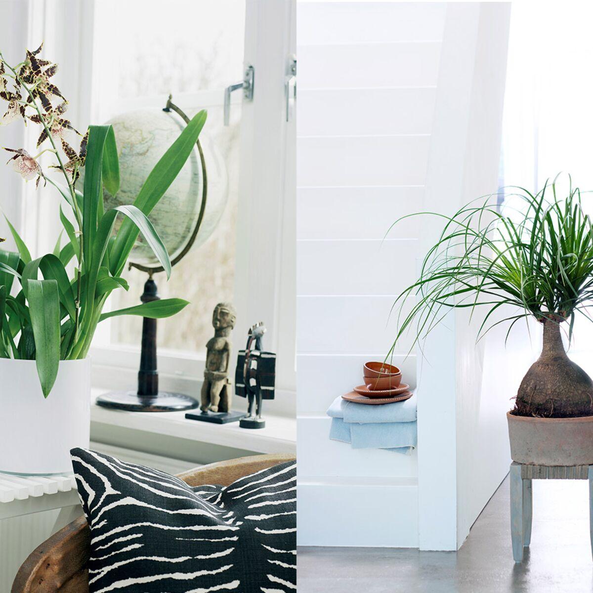 comment bien choisir ses plantes d