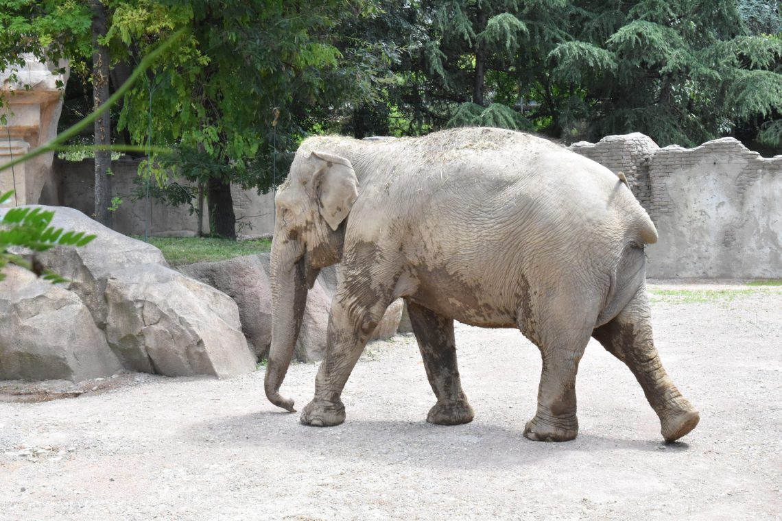 Elefante al Parco delle Cornelle.