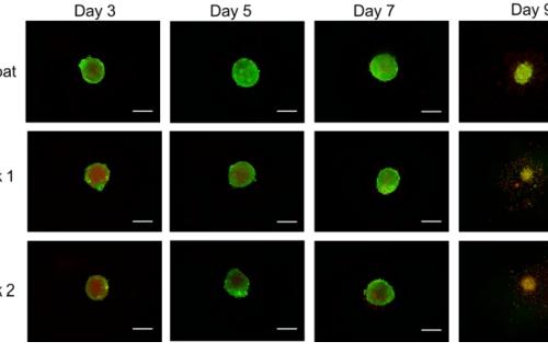 white paper astrocyte