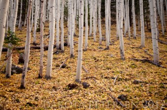 Carpeting Leaves