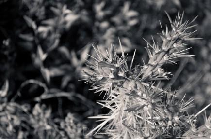 Spring Starburst Mono