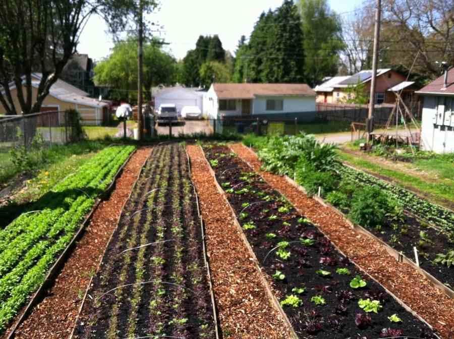 The Side Yard Farm