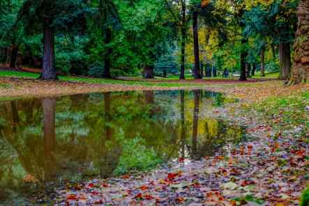 Reflections Laurelhurst Park