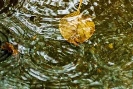 Leaf in Rainstorm