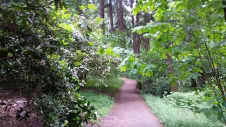 Finding Peace on trail in Mt. Tabor Park