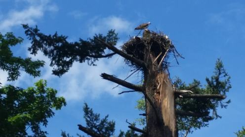 Eagle nest seen while riding in the gorge