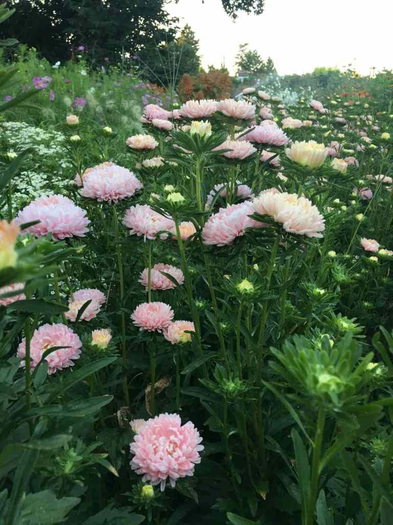 Flowers at Sweet Delilah Farm