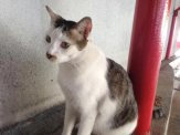 Goodbye kitty at the PWTC LRT station. You're well loved by the locals.