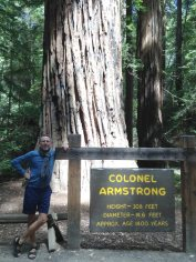 Armstrong Woods in California