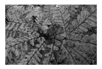 David-Gilmore-photography-3