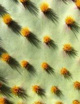 cactus-needles