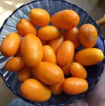 cumquats from University treeR