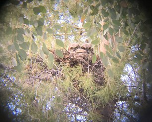 The owlets peering down at us.