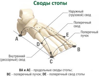 Что такое плоскостопие причины симптомы принципы лечения и профилактики