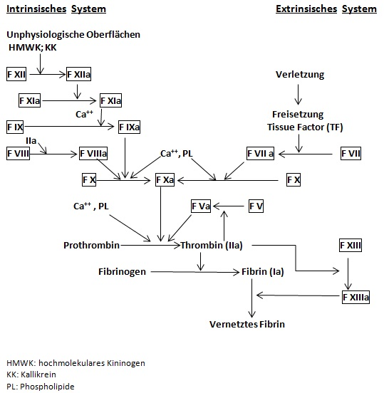 Intrinsisches_System