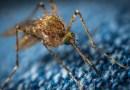 Insekten – Gefährliche Plagegeister