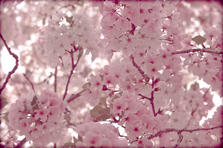 Spring, As Told Through Photographs (3/6)