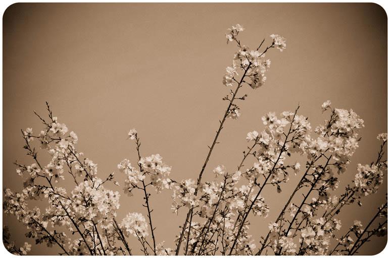 Spring, As Told Through Photographs (4/6)
