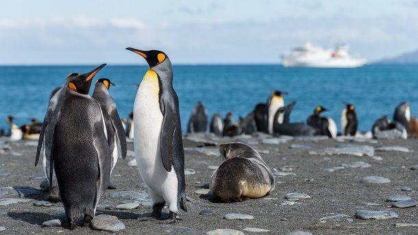 पेंगुइन के बारे में 32 जानकारियाँ – आपको हैरान कर देंगी – About Penguin in Hindi