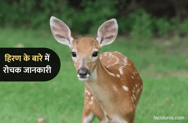 हिरन के बारे में 35 रोचक जानकारी Information About Deer in Hindi