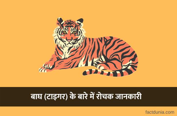 बाघ (टाइगर) के बारे में 40 रोचक जानकारियाँ – Information About Tiger in Hindi