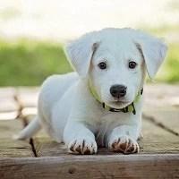 dog pet animal