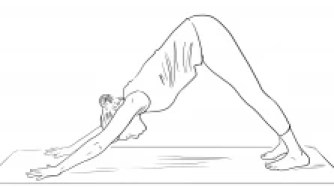 This image has an empty alt attribute; its file name is Adho-Mukha-Shvanasana.png