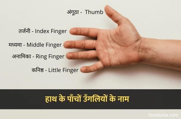 हाथ की उंगलियों के नाम  – Fingers Names in Hindi English