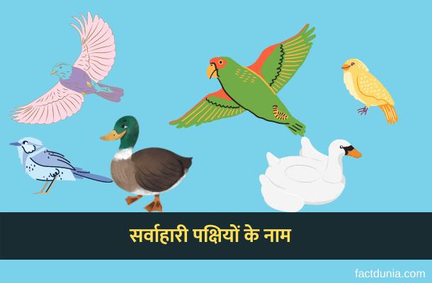 10 सर्वाहारी पक्षियों के नाम हिंदी इंग्लिश में – Omnivores Birds Name in Hindi English