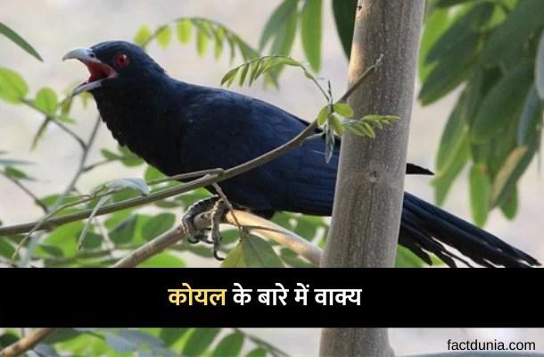 कोयल के बारे में 5 लाइन वाक्य निबंध – 10 Lines about Koyal in Hindi