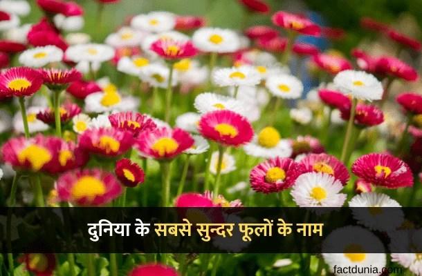 दुनिया के 10 सबसे सुन्दर फूलों के नाम चित्र सहित