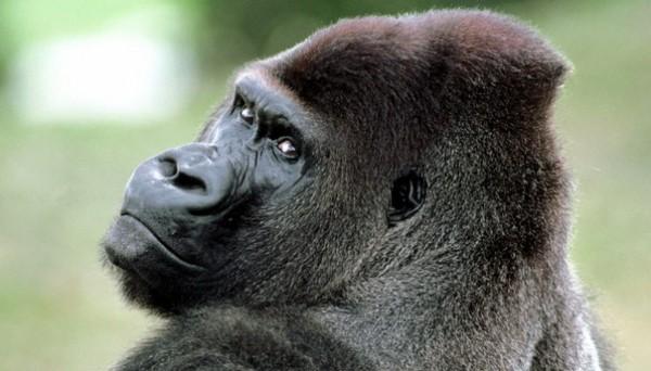 5 историй о животных, которые спасли людей от смерти