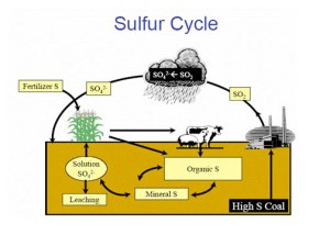 Nutrient Cycles | factfictionfancy