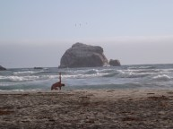 Nudity is common beaches. Here a man does yoga.