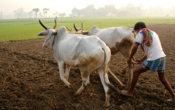 India Agricultural Land featured image factly