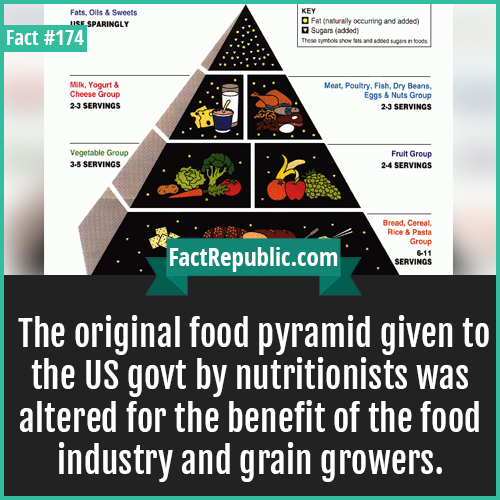 174. US food pyramid-The original food pyramid given to the US govt by nutritionists was altered for the benefit of the food industry and grain growers.