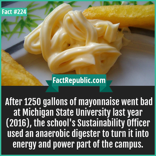 224. mayonnaise-After 1250 gallons of mayonnaise went bad at Michigan State University last year (2016), the school's Sustainability Officer used an anaerobic digester to turn it into energy and power part of the campus.
