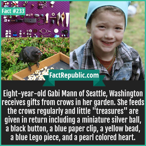 233-CROW GIFTS-Eight-year-old Gabi Mann of Seattle, Washington receives gifts from crows in her garden. She feeds the crows regularly and little