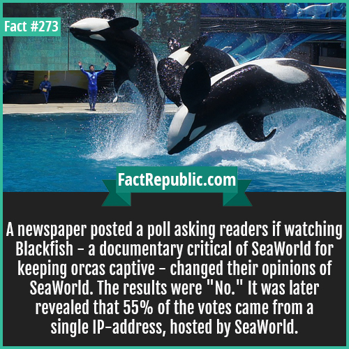 273-Seaworld-A newspaper posted a poll asking readers if watching Blackfish -- a documentary critical of SeaWorld for keeping orcas captive - changed their opinions of SeaWorld. The results were