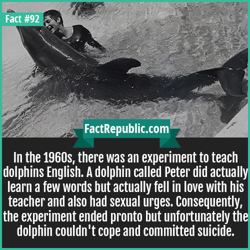 92. Dolphin Experiment-In the 1960s, there was an experiment to teach dolphins English. A dolphin called Peter did actually learn a few words but actually fell in love with his teacher and also had sexual urges. Consequently, the experiment ended pronto but unfortunately the dolphin couldn't cope and committed suicide.