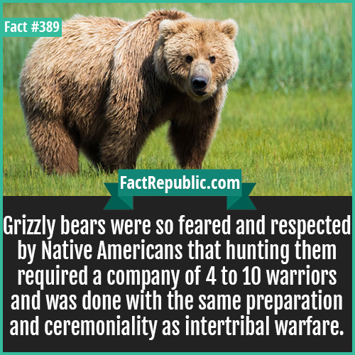 389. Grizzly Bears-Grizzly bears were so feared and respected by Native Americans that hunting them required a company of 4 to 10 warriors and was done with the same preparation and ceremoniality as intertribal warfare.