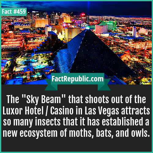 459. Luxor Hotel-The 'Sky Beam' that shoots out of the Luxor Hotel / Casino in Las Vegas attracts so many insects that it has established a new ecosystem of moths, bats, and owls.