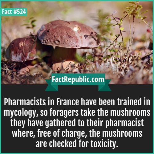 524. Mashroomsj-Pharmacists in France have been trained in mycology, so foragers take the mushrooms they have gathered to their pharmacist where, free of charge, the mushrooms are checked for toxicity.
