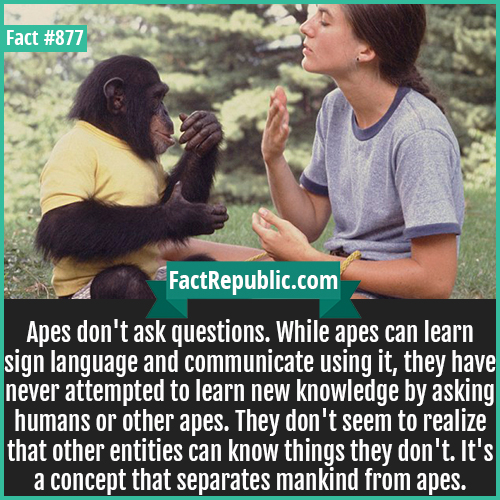 877. Ape Communication-Apes don't ask questions. While apes can learn sign language and communicate using it, they have never attempted to learn new knowledge by asking humans or other apes. They don't seem to realize that other entities can know things they don't. It's a concept that separates mankind from apes.
