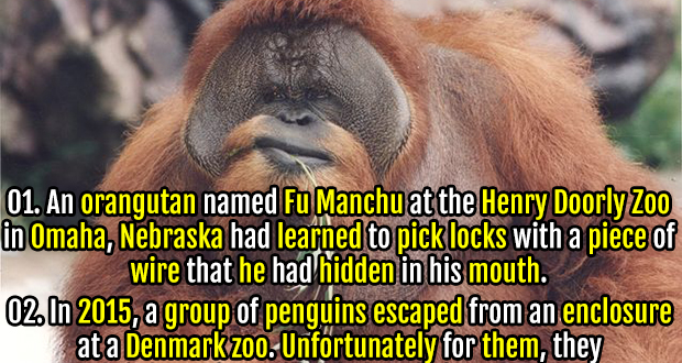 40 Adorable & Terrifying Facts about Zoo Animals | Fact ...