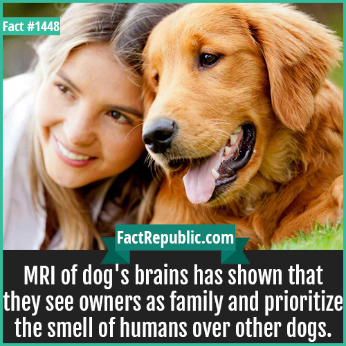1448. Dog Brain MRI-MRI of dog's brains has shown that they see owners as family and prioritize the smell of humans over other dogs.