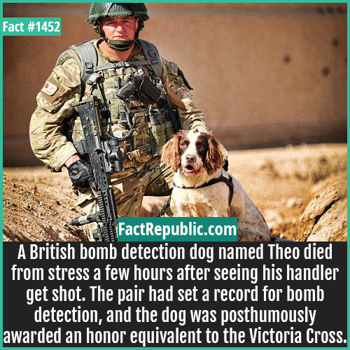 1452. Theo Dog-A British bomb detection dog named Theo died from stress a few hours after seeing his handler get shot. The pair had set a record for bomb detection, and the dog was posthumously awarded an honor equivalent to the Victoria Cross.